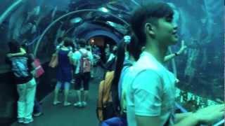 The World's Largest Aquarium 2013, S.E.A Aquarium - Resorts World Sentosa, Singapore