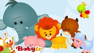 Learning Animal Sounds and Names for Kids & Toddlers   BabyTV