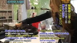 Vegetarian Elite Simone Reyes, Activist Angel for the Animals