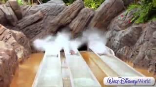 Disney 39 s Typhoon Lagoon Water Park Overview Walt Disney World Disney Parks