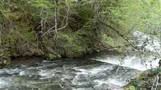 Rijeka Orlja - izvor hladne vode