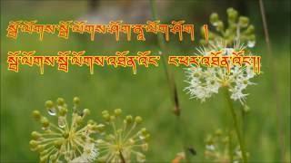 Satha Ringsa Choe Ya Maso by Pema Deki and Jigme Norbu Wangdi