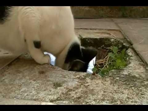 Gato doméstico Mãe gato Filhotes de gato Mundo animal Psicologia animal