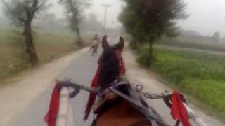 Tangay Wala Khair Mangda Masood Rana