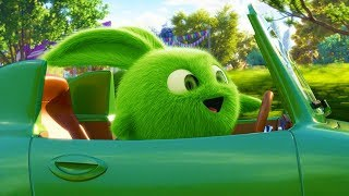 SUNNY BUNNIES - LITTLE RACERS | Cartoons for Children | Funny Cartoons for Kids