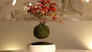 اختراع ياباني لشجرة تطفو في الهواء !!!
