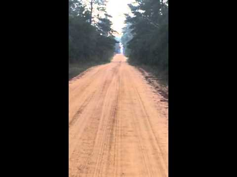 Xxx Mp4 Deer Dog Hunting Bunnell Fl RLM Kennels Yahoo Com 3gp Sex