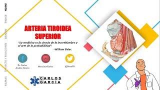 Anatomía - Arteria Tiroidea Superior (Origen, Trayecto y Relaciones, Ramas)