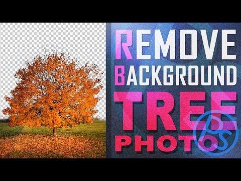 Xxx Mp4 Belajar Photoshop Membuang Background Foto Pohon Cara Mudah 3gp Sex