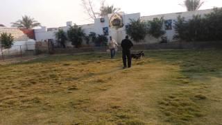 Foska attack training
