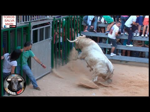 STORY OF TH BULLS IN SPAIN SHOW SHOW AND ESPECTACLE