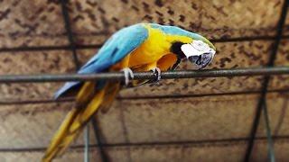 Amazingly Beautiful and Friendly Macaw Birds