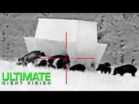 Xxx Mp4 Night Vision Pig Hunting Insight LWTS Pulsar Trail FLIR PTS536 And Breach PTQ136 3gp Sex