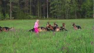 Litle girl 5 years playing with 14 german shepherds.