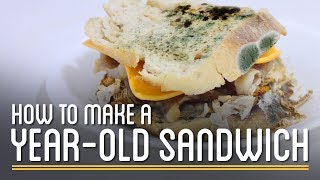 How to Make a Year-Old Edible Sandwich