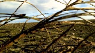 Duck and Goose Shooting Scotland-2015 2016 Promo Video