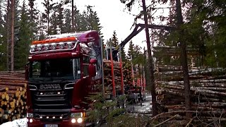 Scania R580 6X4 Timber Truck Loading In Sweden
