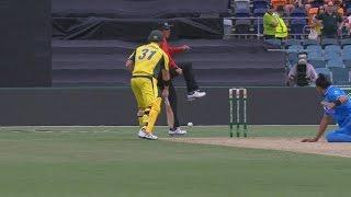 Finch injures umpire