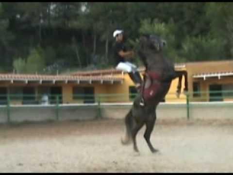 caballos espectaculo popular de menorca
