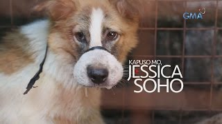 Kapuso Mo, Jessica Soho: Karne ng Aso