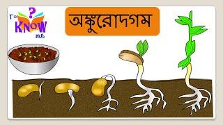 Science - Germination (অঙ্কুরোদগম) - Bengali