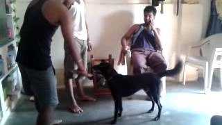 FUNNY DOG IN INDIAN AMBERPET