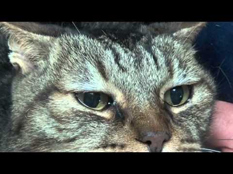 Если снятся глаза кошки