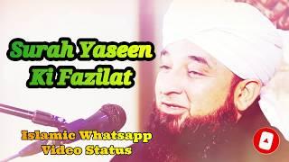 Surah Yaseen Ki Fazilat ❤️ Saqib Raza Mustafai Whatsapp Status Video