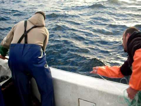 pesca ao goraz