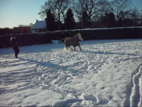 Horses in winter - Popeye + Holly 2 !