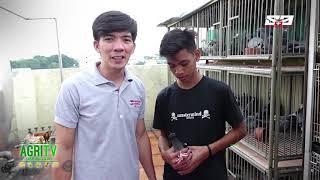 AGRITV NOVEMBER 11, 2018 EP Kalapatids Pagpapaligo ng Kalapati with Pigeon Bloom