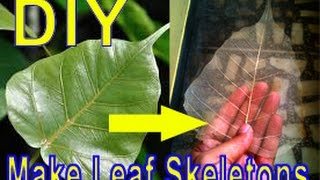 DIY; skeleton of leaf