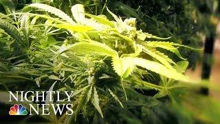 Study: Medical Marijuana Helps Children Who Have Seizures | NBC Nightly News
