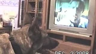 JERRY WATCHING HORROR MOVIE.avi