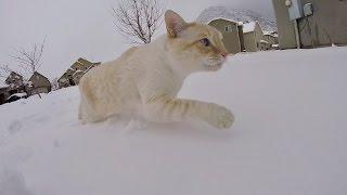 ❄️️ SNOW WE MEET AGAIN 😼