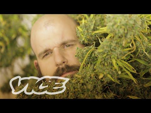 The Dark Grey Market Canadian Cannabis