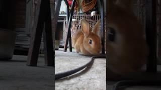 My rabbit 🐇【miyu life🏠】
