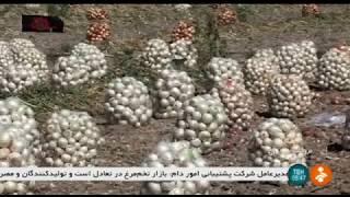 Iran White Onion harvest, Marvdasht county برداشت پياز سفيد شهرستان مرودشت ايران