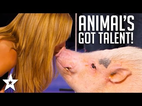 ANIMALS Got Talent Compilation The Most Intelligent & Cleverest From Around The World