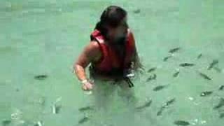 Baby shark attack
