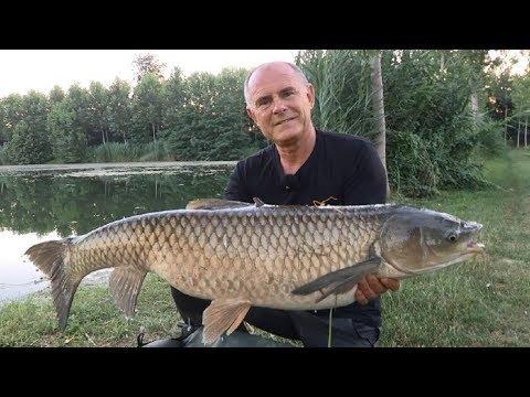 Xxx Mp4 K Karp Carp Fishing TV K Karp Appunti Di Carp Fishing Il Vero Carp Fishing 3gp Sex