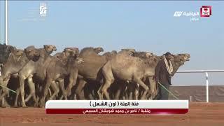 الاستديو المصاحب لتغطية مهرجان الملك عبدالعزيز للإبل يوم الاحد 1439/5/11هـ