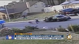 Video shows sheriff's department dog taking down suspect in Lakeside