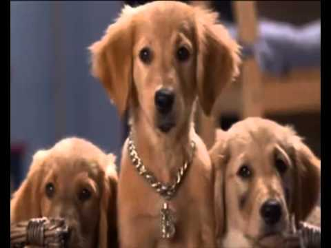 B-Dawg-Rock show