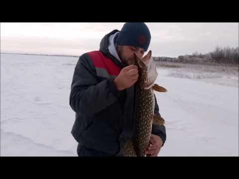 зима.трофейная щука видео