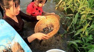 Ra Bờ Sông Đãi Hến Về Làm Nồi Cháo Hến Nóng Hổi Vừa Thổi Vừa ăn | Thôn Nữ Miền Tây Tập 103