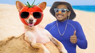 4 Ways to Protect Your Dog from the Sun
