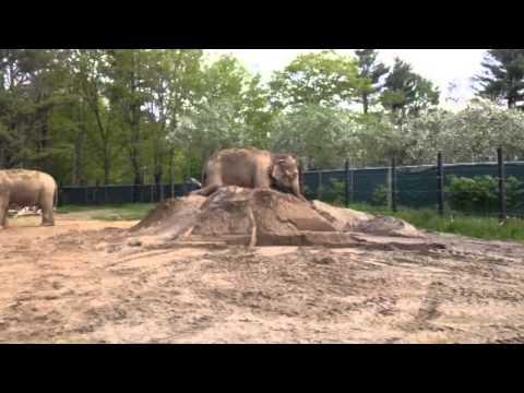 Xxx Mp4 Hope Elephants Rosie Queen Of The Sandpile More 3gp Sex