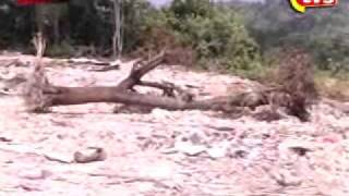 DS 2010.12.15 - MB ALAM FLORA.wmv