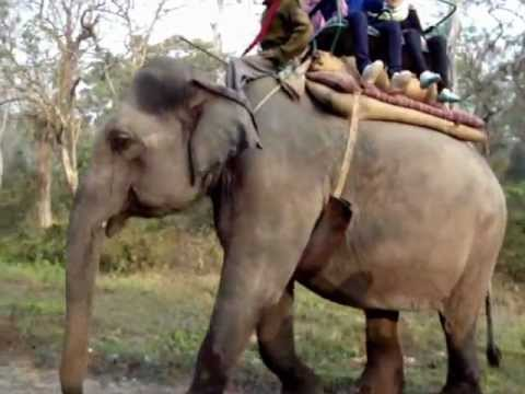 Elephant Safari-Jaldapara Wildlife Sanctuary